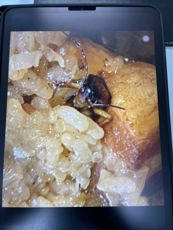 餐食中還有蟑螂出現。(民進黨新北市團提供)