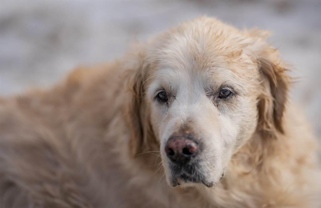 一名狗主人日前帶愛犬出門散步,期間發現被流浪狗跟蹤,沒想到一摸浪浪的頭後,秒被對方視為新飼主。(示意圖/達志影像)