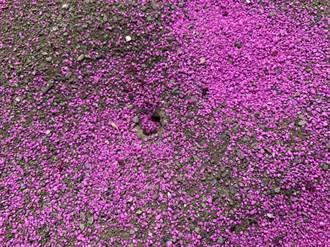 紅火蟻入侵雲林3鄉鎮?動植物防疫所:為攻擊性低的熱帶火蟻