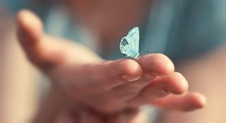 法國博物學家霍蘭曾說過 蝴蝶「在生命的痛苦中給我們撫慰」