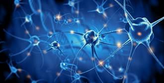 神經衝動的本質