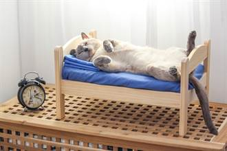無用空間變身「貓咪睡房」 網羨炸:有床有電視