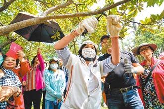 女性樹木修剪專班 宜蘭首開