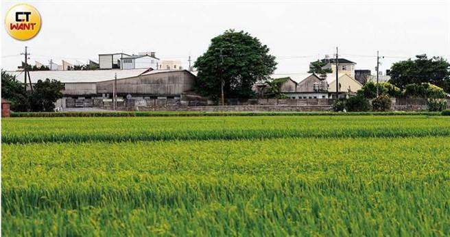 宏福集团的发迹工厂隐身在云林稻田间。(图/黄威彬摄)