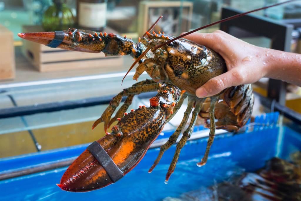廚師準備下鍋煮龍蝦時,發現其外殼布滿金黃色斑點,才意識到牠是極稀有龍蝦的「藍紋龍蝦」。(示意圖/達志影像)
