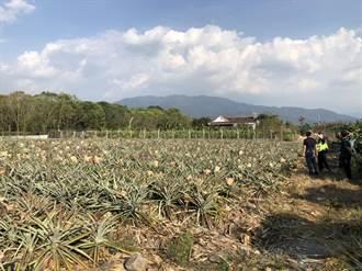 從農產到鋼筋全都偷 千顆鳳梨賊工地落網
