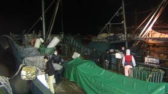 澎湖查獲越境大陸運補船 夾帶637公斤豬肉緊急消毒銷毀