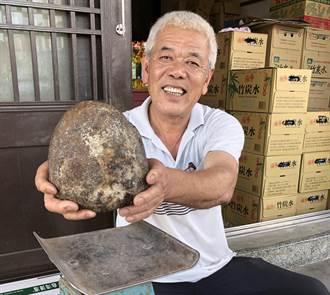 到金門海邊遊玩 家犬疑撈獲1.6公斤珍寶「龍涎香」