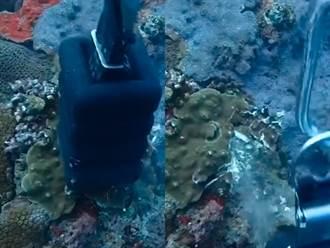 龍洞潛水客丟鉛塊砸碎海底珊瑚礁 影片曝光網氣炸:根本亂丟