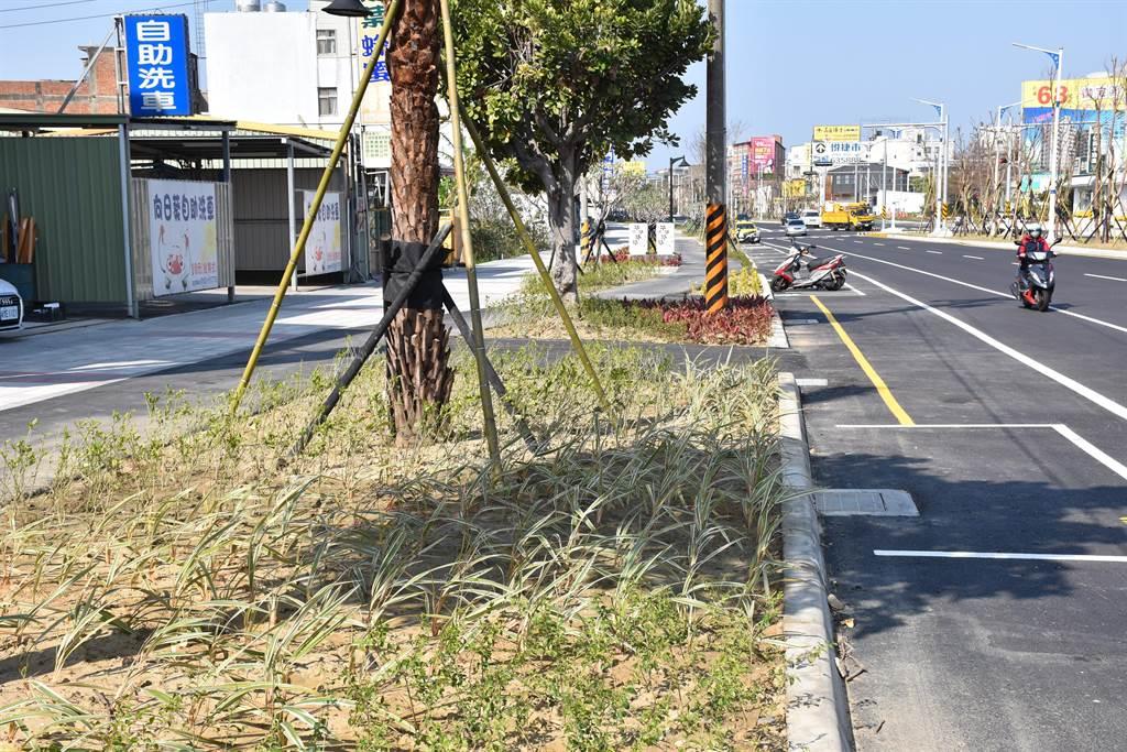 頭份市中央改善工程中行人與自行車道以綠籬隔離,獲得營建署肯定。(謝明俊攝)