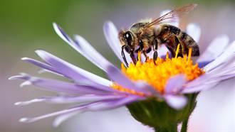 4年前才移走12萬隻蜜蜂 天花板再現巨型蜂巢  她秒崩潰
