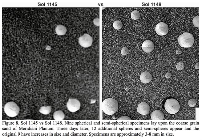 科學家比對火星探測車的顯微照片,這種白色的小球數量會增加,一種看法認為,白色小球說不是火星蘑菇,證明火星有生物。(圖/NASA)