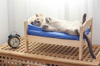 無用空間大改造 變身「超萌貓咪睡房」 網羨炸:有床有電視
