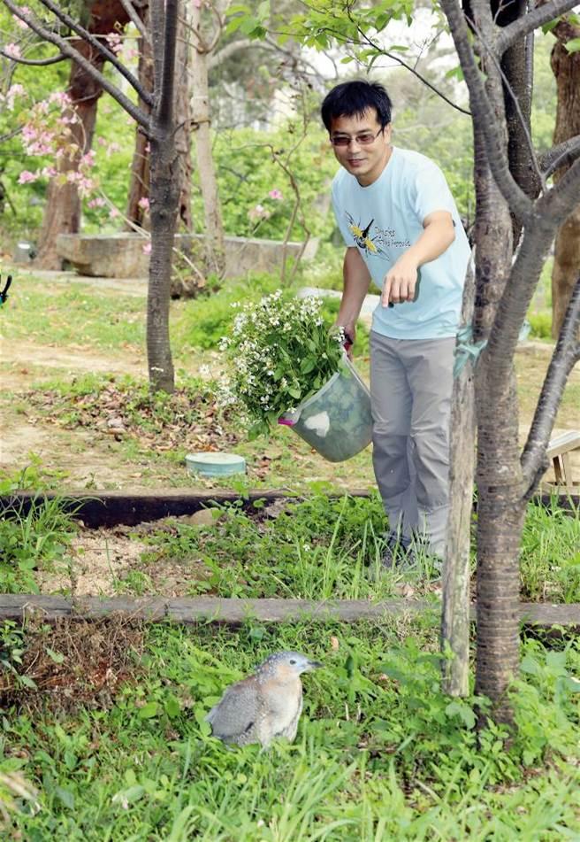 柯心平喜歡各種動物,圖為新竹館戶外綠地上的黑冠麻鷺。(圖/林格立提供)