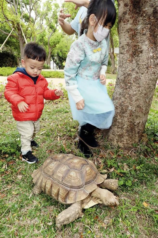 新竹館的蘇卡達象龜總是吸引小朋友圍觀。(圖/林格立提供)