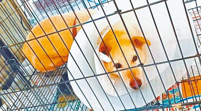 台北市動物之家收容量嚴重不足,台北市政府動保處斥資近7億規畫改建。(北市動保處提供/張薷台北傳真)
