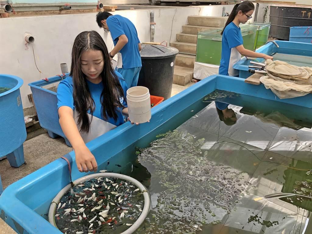 金門農工水產養殖科在做中學、學中做,拿出全國競賽第一的好成績。(李金生攝)