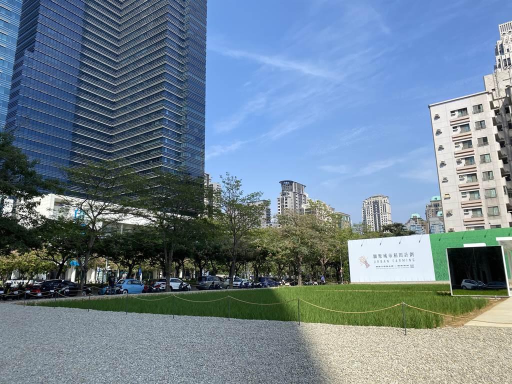 七期最貴稻田由聯聚建設打造,未來將成為豪宅大樓案。(葉思含攝)