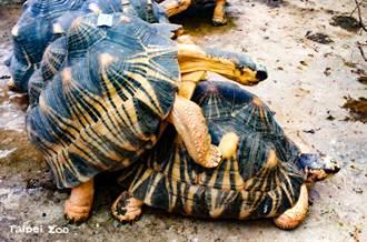動物園突傳出「機關槍掃射聲」遊客一看羞爆:在交配啦