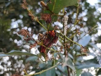 蟲害防治不同調效果大打折 蜂農盼治標治本