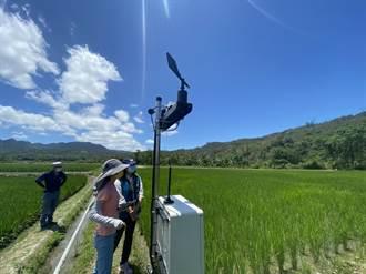 未雨綢繆!花蓮富里啟動輪灌機制 農委會試運轉間歇灌溉技術
