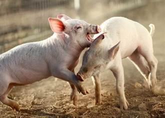 國民黨指為食安反萊豬  民進黨:假訊息
