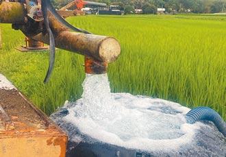 大旱危機 池上農民憂水稻空包彈
