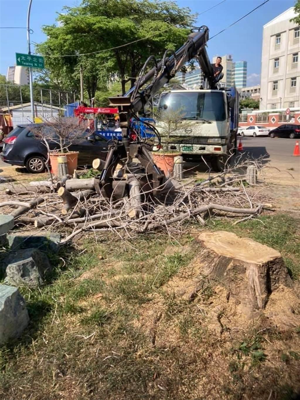 染病玉蘭花樹木已請建設局移除。(讀者提供/張妍溱台中傳真)