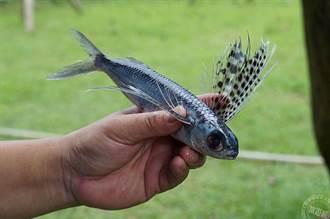 迎接飛魚季 瓏山林蘇澳冷熱泉度假飯店邀體驗泰雅飛魚文化
