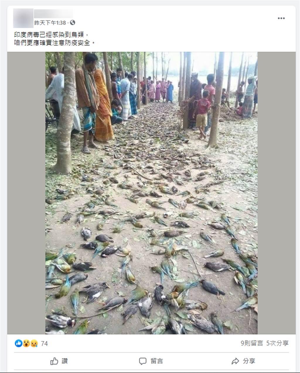 網傳「印度新冠病毒已經感染到鳥類」的鳥屍遍地照,經「台灣事實查核中心」查證後,已知是錯誤訊息,民眾勿以訛傳訛,繼續散播。(圖/社群平台傳言截圖)