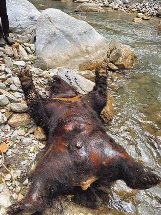 死因不明 台灣黑熊陳屍拉庫拉庫溪畔