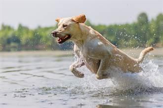 愛犬熱昏躲進水溝變烤麻糬 巨身卡小縫主人看了好無奈