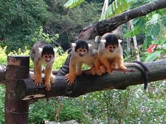 疫情持續擴大 台北市立動物園也封園