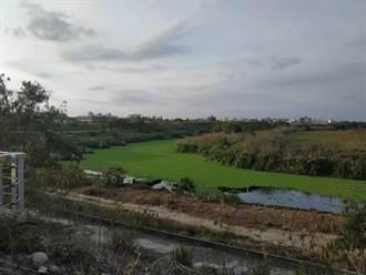 缺水河川優養化 布袋蓮布滿北港溪有如「水上草原」