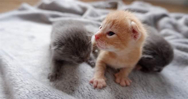 母貓剛產子卻狂偷同伴的寶寶 飼主跟蹤見心酸內幕