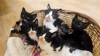 上班到一半發巨響!8隻貓從天而降 所有人全嚇傻