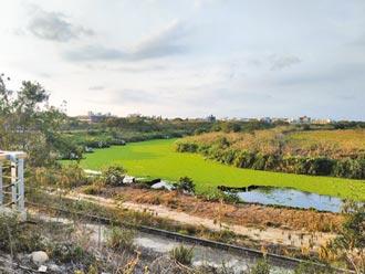 雲林北港溪缺水優養化 布袋蓮大爆發