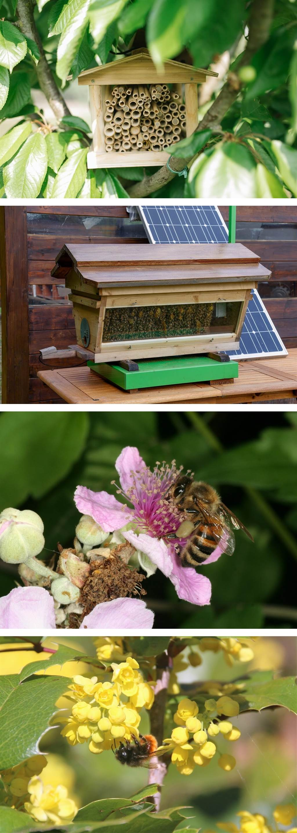 Lamborghini以60萬隻蜜蜂和新「科技蜂巢」慶祝世界蜜蜂日