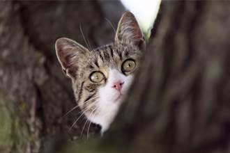 以為自己是鳥?流浪母貓霸佔鳥巢育兒 公貓罕見守在旁邊