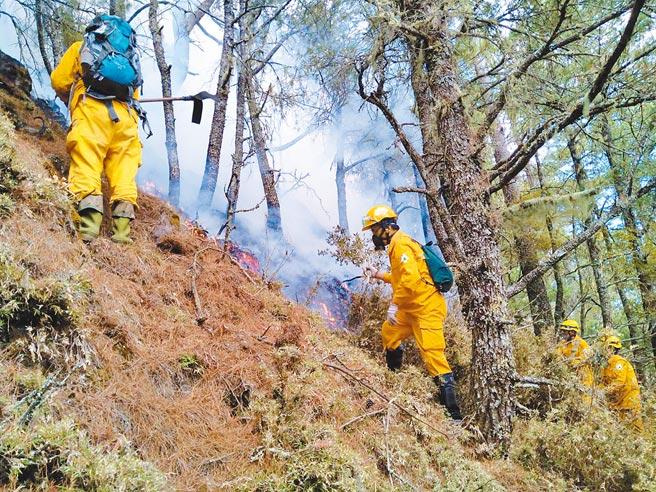 八通關杜鵑營地自16日因山友用火不慎釀成森林大火,至今火勢仍未撲滅,延燒面積已達50公頃,被害面積7.5公頃以上,已由林務局成立緊急應變小組。(嘉義林管處提供)