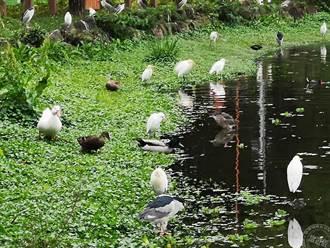 禁餵食野生動物 影響動物及荷包 台北市將開罰最高六千