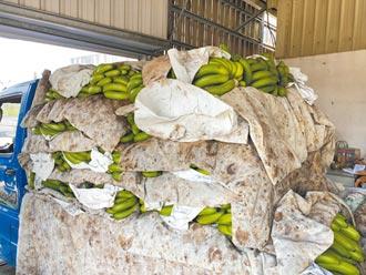 買氣大減 嘉義香蕉恐破10元