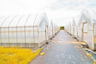 竹縣停課2周造成滯銷 推在地有機蔬菜箱