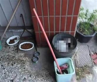 慘忍!台中浪貓頭部遭重擊慘死 被丟在餵養人門前垃圾桶
