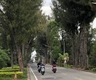 金門大學路段拓寬  5/27進場移植兩旁大樹
