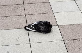 路上驚見會動的球鞋 網友近看嚇傻:不是NIKE?