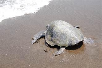 5月23日世界烏龜日 愛龜愛地球