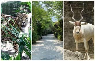 台北动物园防疫闭园 动物们更自在大方