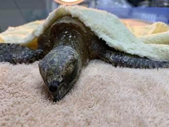 漁業誤捕致鯨豚傷亡 海保署將再教育漁民