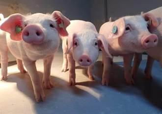 農委會家衛所「負壓隔離動物試驗設施」供動物用基改疫苗試驗認證